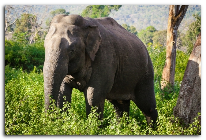 Bandipur wildlife safari